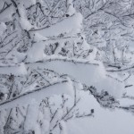 Ice Fog Branch