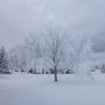 Ice Fog Tree